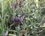 cartolina-fiori-1