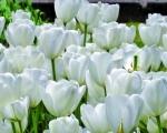 cartolina-fiori-3