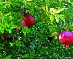 cartolina-fiori-4